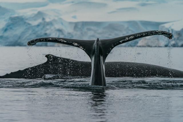 Sea Life from the Ponant icebreaker