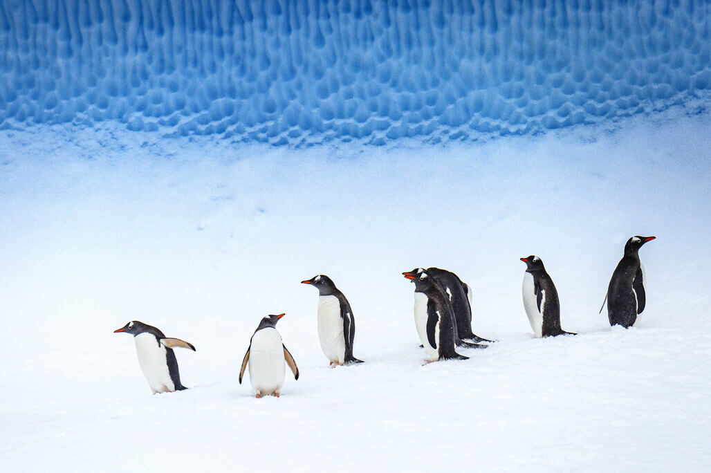 The Weddell Sea from the Ponant icebreaker ©studioponant-laurence_fischer